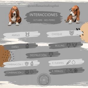 INTERACCIONES PERRO