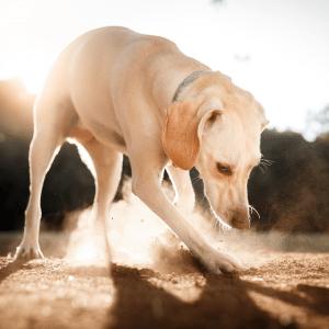 perro de tierra